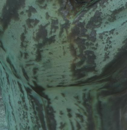 02.5-Turtle-tool-marks